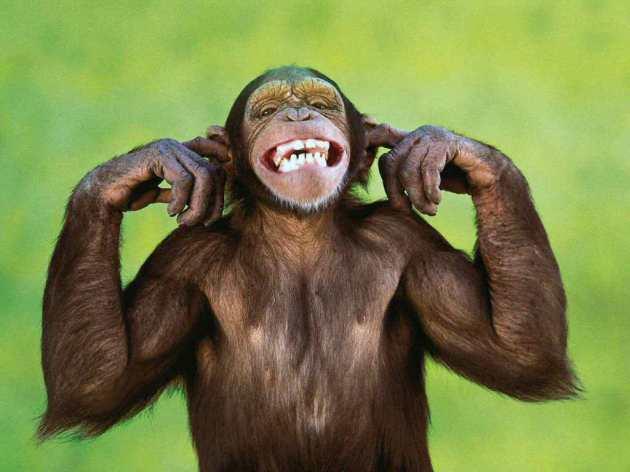 Monkey brains want stories.